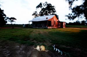 Mississippi Delta Light, a Clarksdale story from Barefoot Workshops.